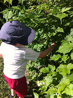 Lil-E-picking-raspberries